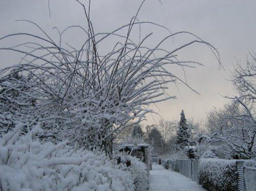 Snow Pic